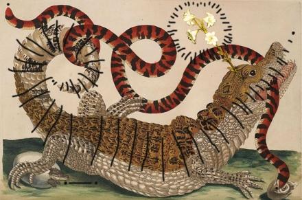 Remix Maria Sibylla Merian-Krokodilkaiman (Caiman crocodilus) im Kampf mit einer Korallenrollschlange (Anilius scytale) (1701-1705).jpg